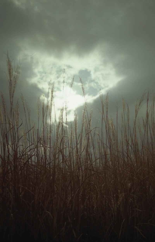 「曇り空から覗く空とススキ」の写真