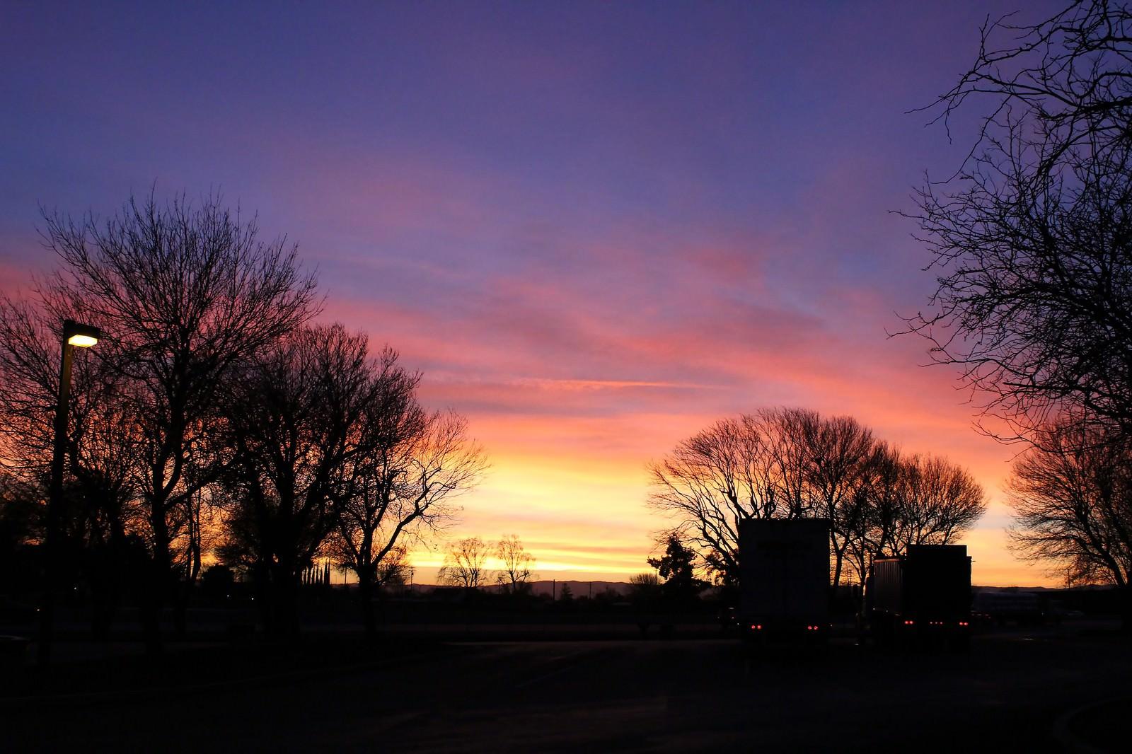 「夕暮れと木のシルエット」の写真