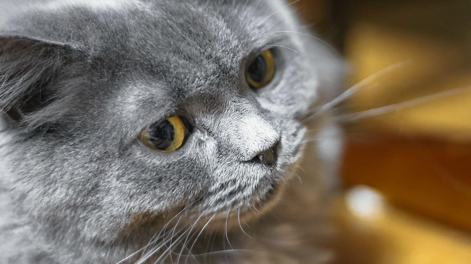 「威圧する猫」の写真