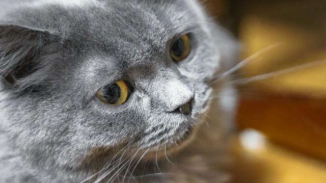威圧する猫の写真
