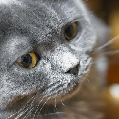 「威圧する猫」の写真素材