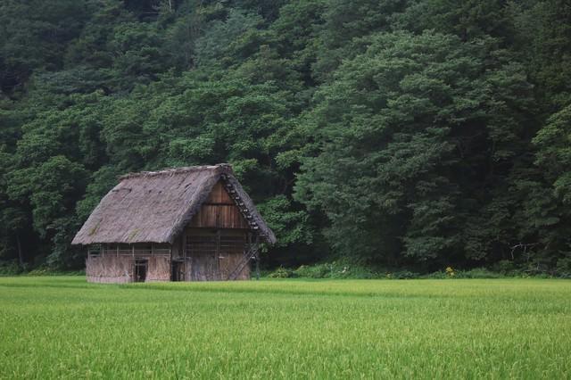 田んぼの中の家の写真