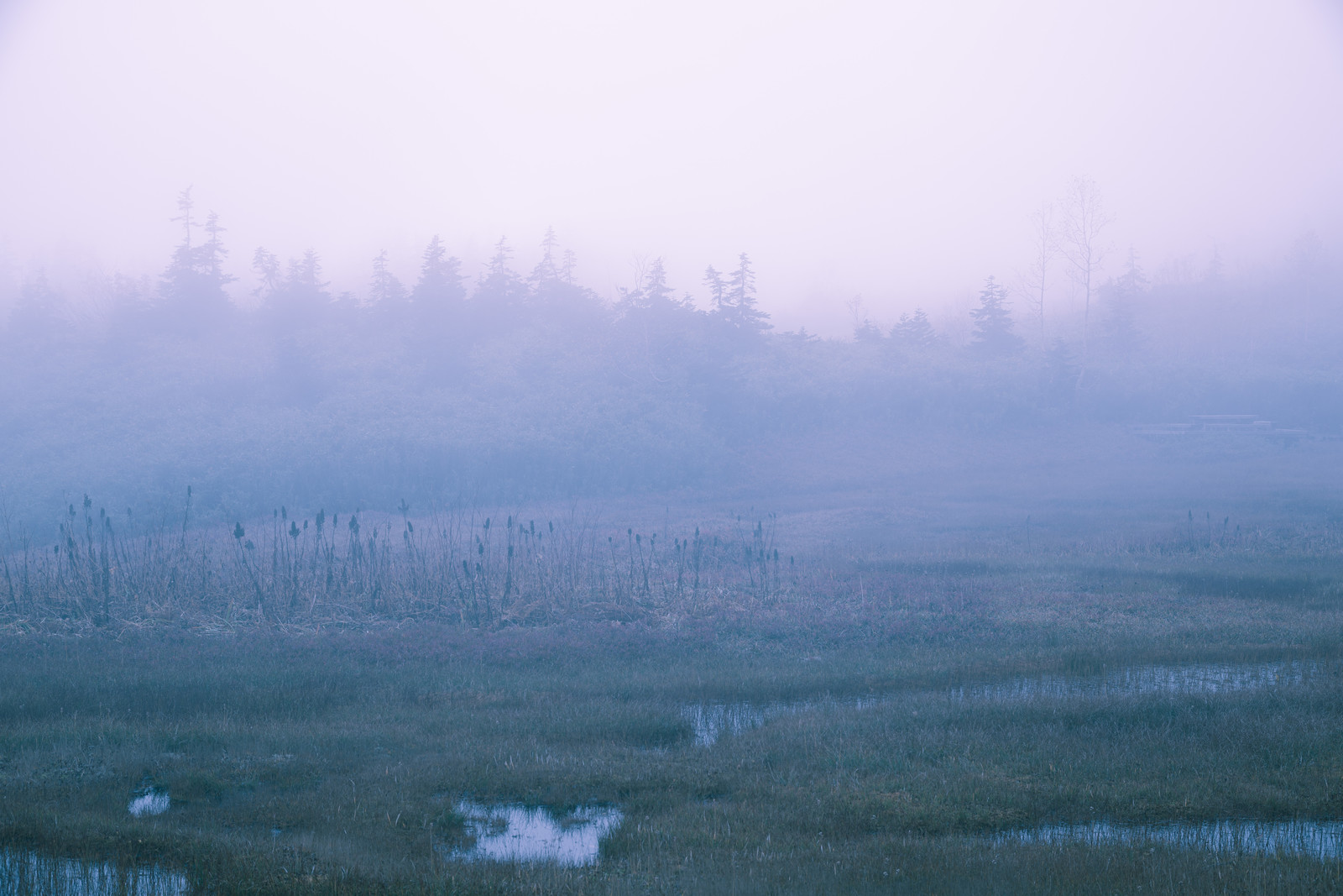 霧のかかった自然風景のフリー素材