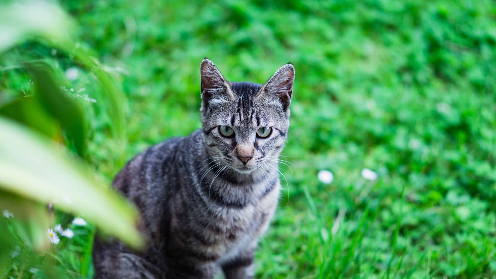 「庭先でこちらを見つめるにゃんこ」の写真