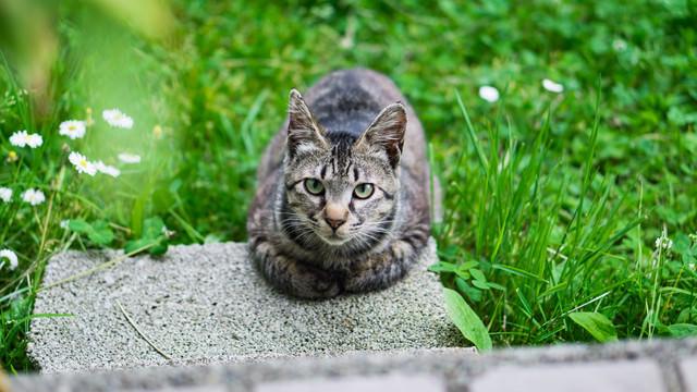 2月22日はにゃんにゃん猫の日の写真