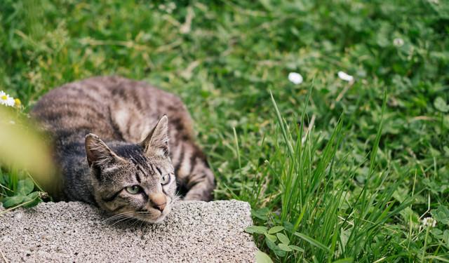 春の陽気にごろ寝にゃんこの写真