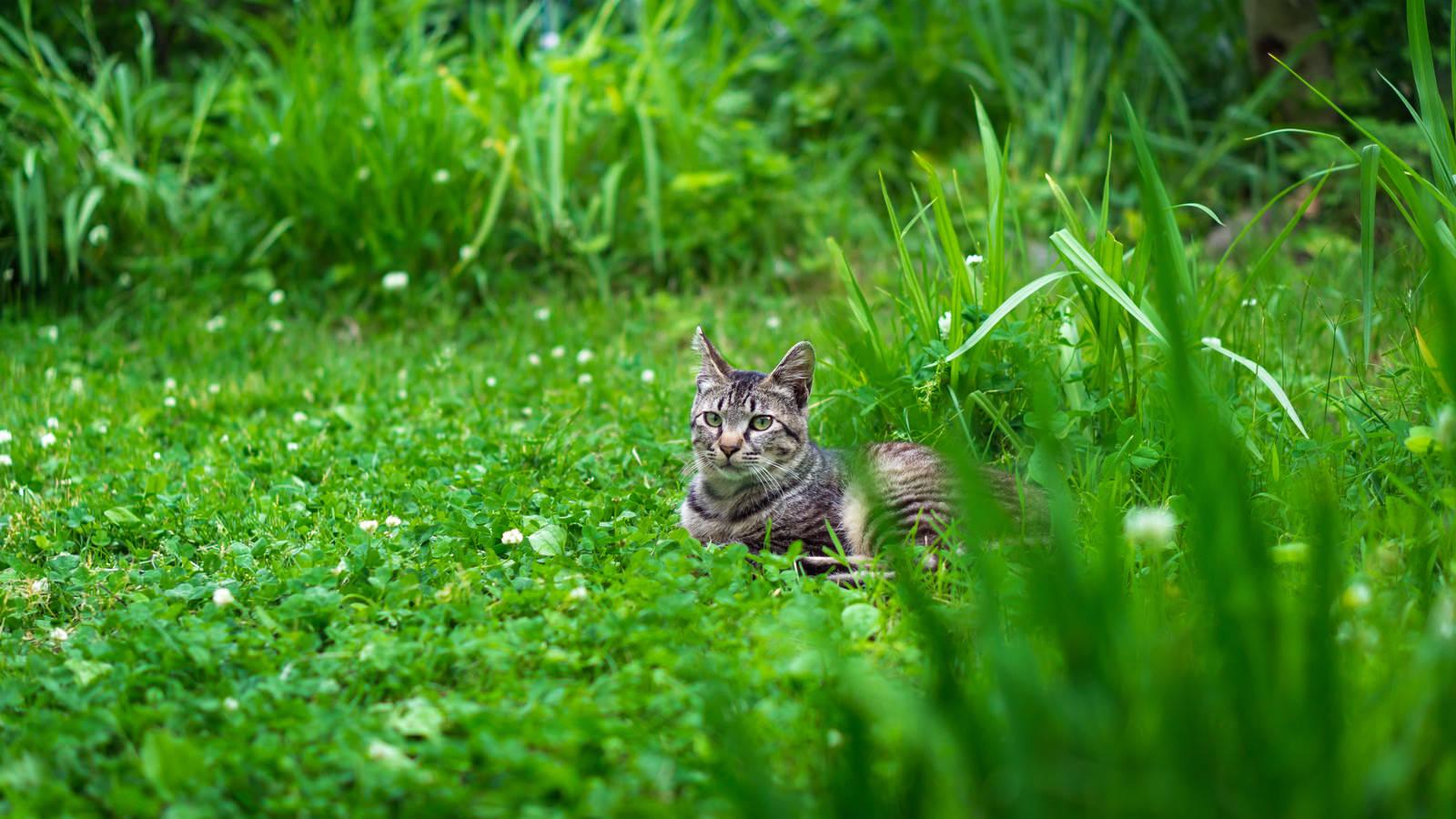 「草むらで日向ぼっこするネコ氏」の写真