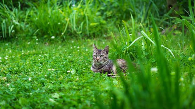 草むらで日向ぼっこするネコ氏の写真
