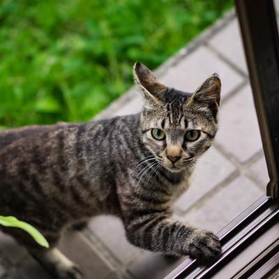 恐る恐る家の中に入ろうとする猫の写真