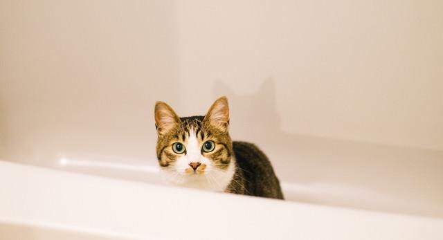 浴槽にゃんこの写真