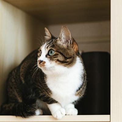 本棚の猫の写真