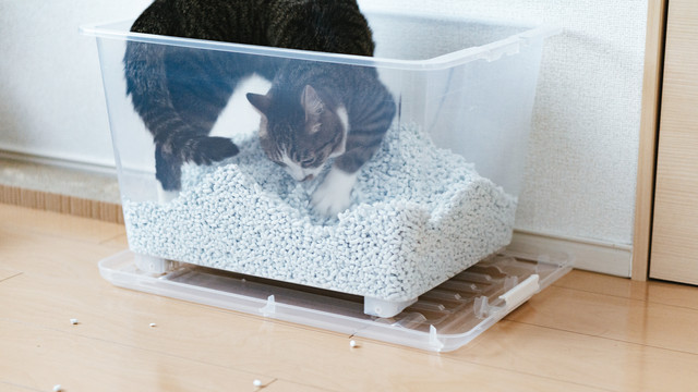 猫砂で荒ぶる猫さんの写真