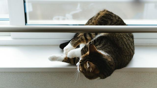 出窓でゴロ寝する猫の写真