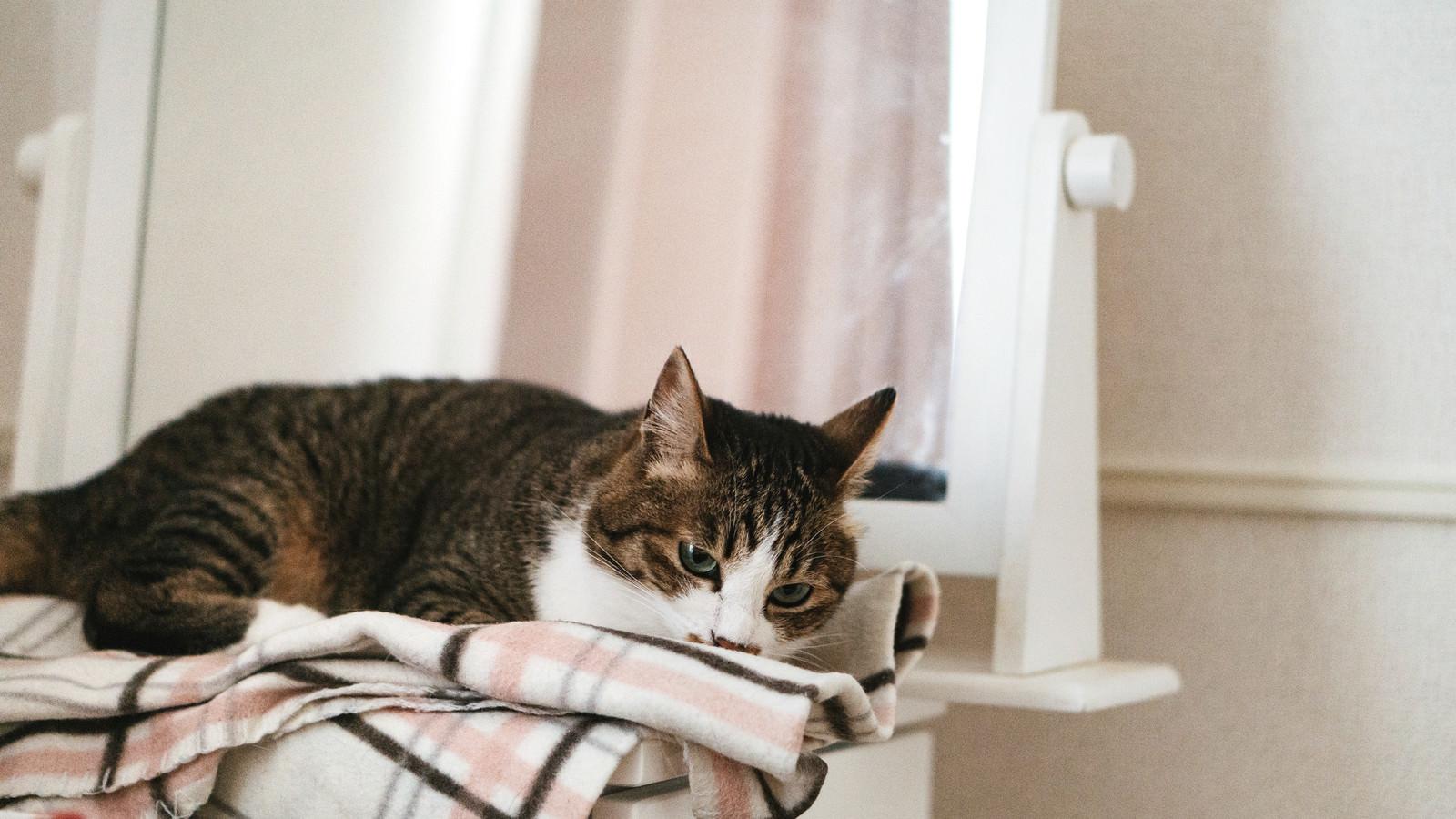 「寝落ち寸前の猫」の写真