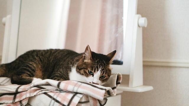 寝落ち寸前の猫の写真