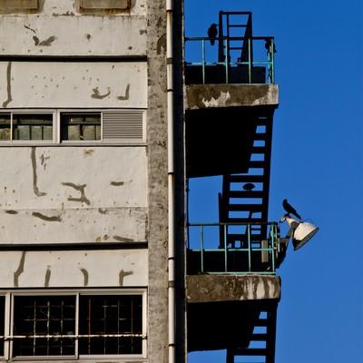古びたマンションと階段のカラスの写真