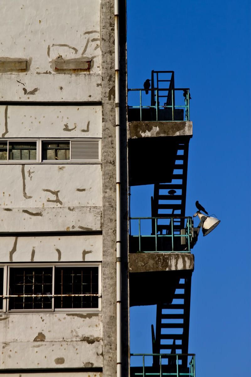 「古びたマンションと階段のカラス」の写真
