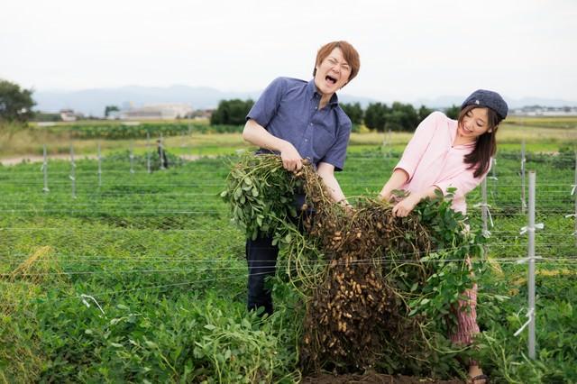 夫婦で力を合わせて落花生を収穫の写真