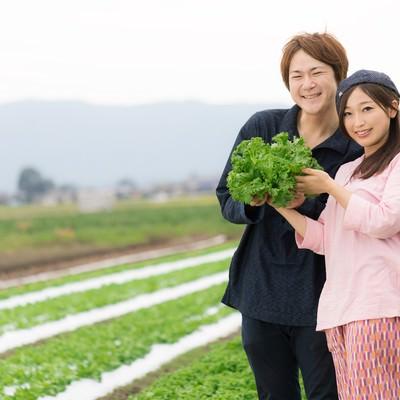 「福岡県大刀洗町の採れたてリーフレタスをアピールする夫婦」の写真素材