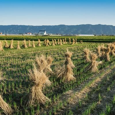 「刈り終えた畑」の写真素材
