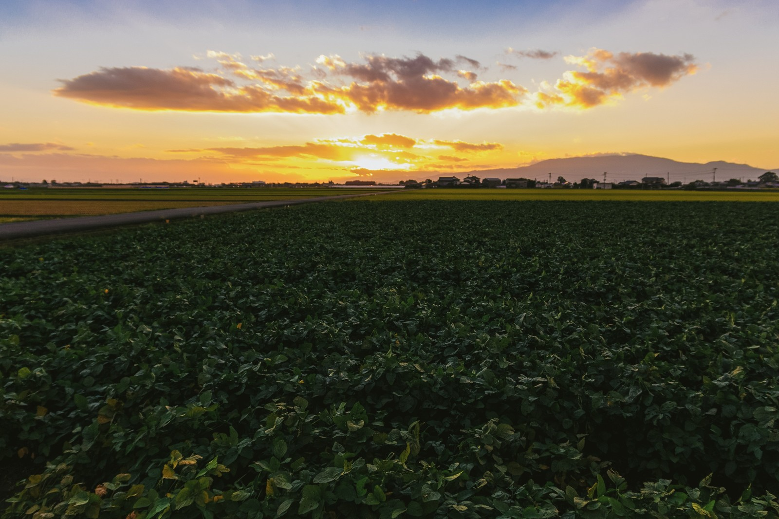 「夕暮れの田園風景(福岡県大刀洗町)夕暮れの田園風景(福岡県大刀洗町)」のフリー写真素材を拡大