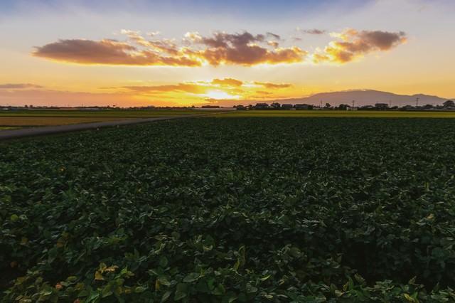 「夕暮れの田園風景(福岡県大刀洗町)」のフリー写真素材
