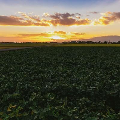 「夕暮れの田園風景(福岡県大刀洗町)」の写真素材