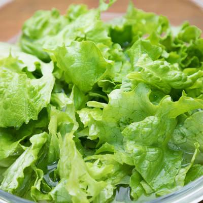 「サラダ用のグリーンレタス」の写真素材