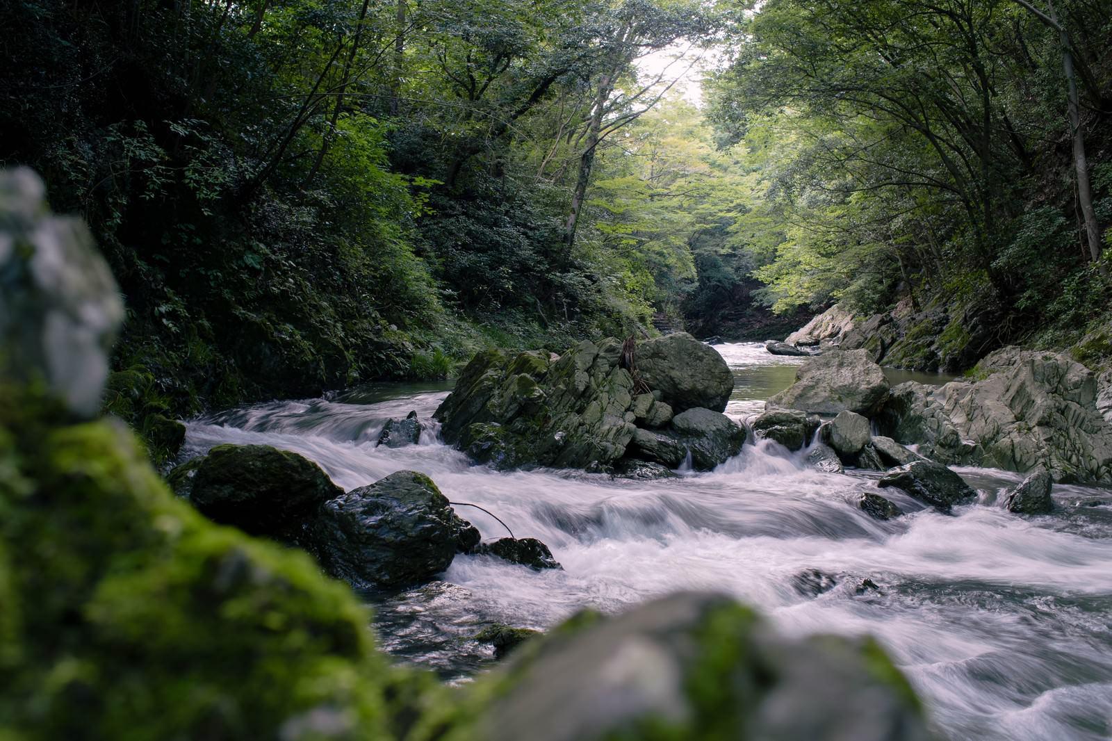 「御荷鉾緑色岩が美しい渓谷」の写真