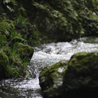 清らかな水の流れの写真