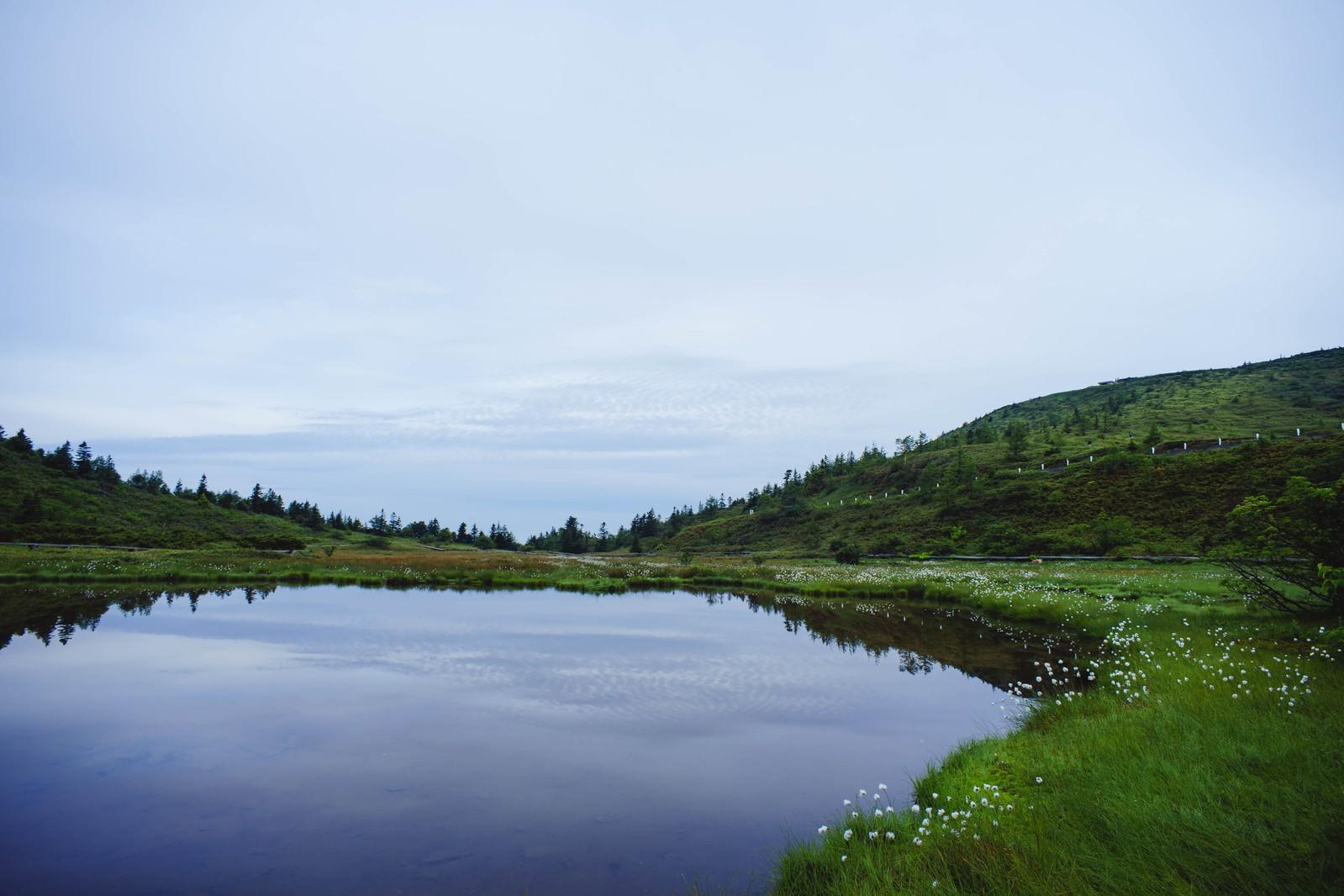 「ワタスゲが咲く弓池」の写真