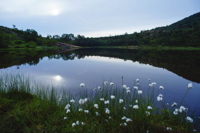 水鏡のような弓池とワタスゲの写真