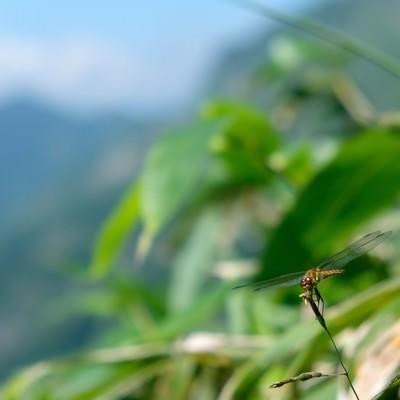 葉に捕まるトンボの写真