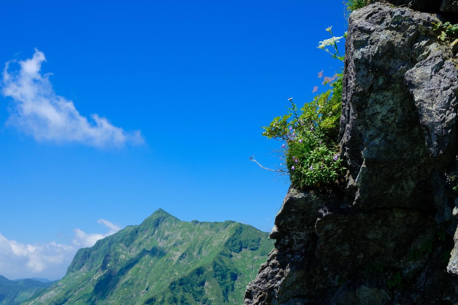「岩肌に咲く高山植物と青空」の写真