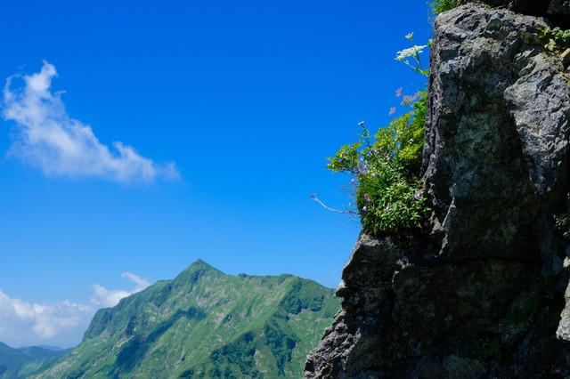 岩肌に咲く高山植物と青空の写真