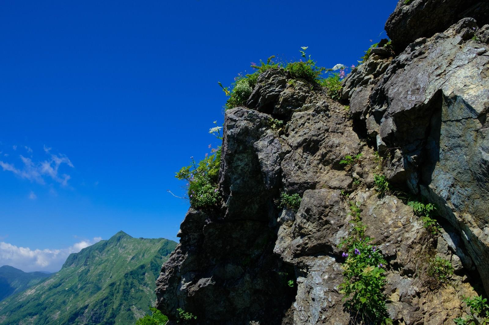 「青空と岩肌に咲く高山植物」の写真
