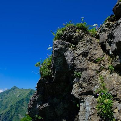 青空と岩肌に咲く高山植物の写真