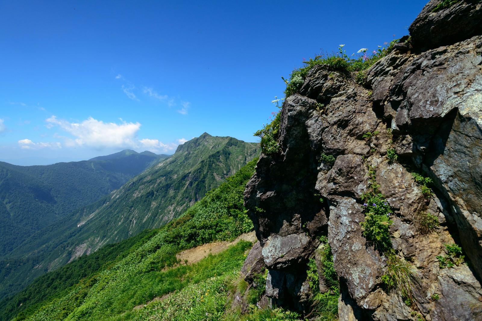 「岩肌にひっそりと咲く高山植物」の写真