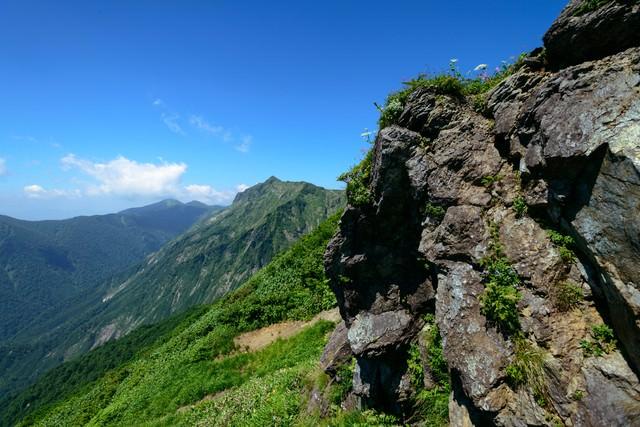 岩肌にひっそりと咲く高山植物の写真