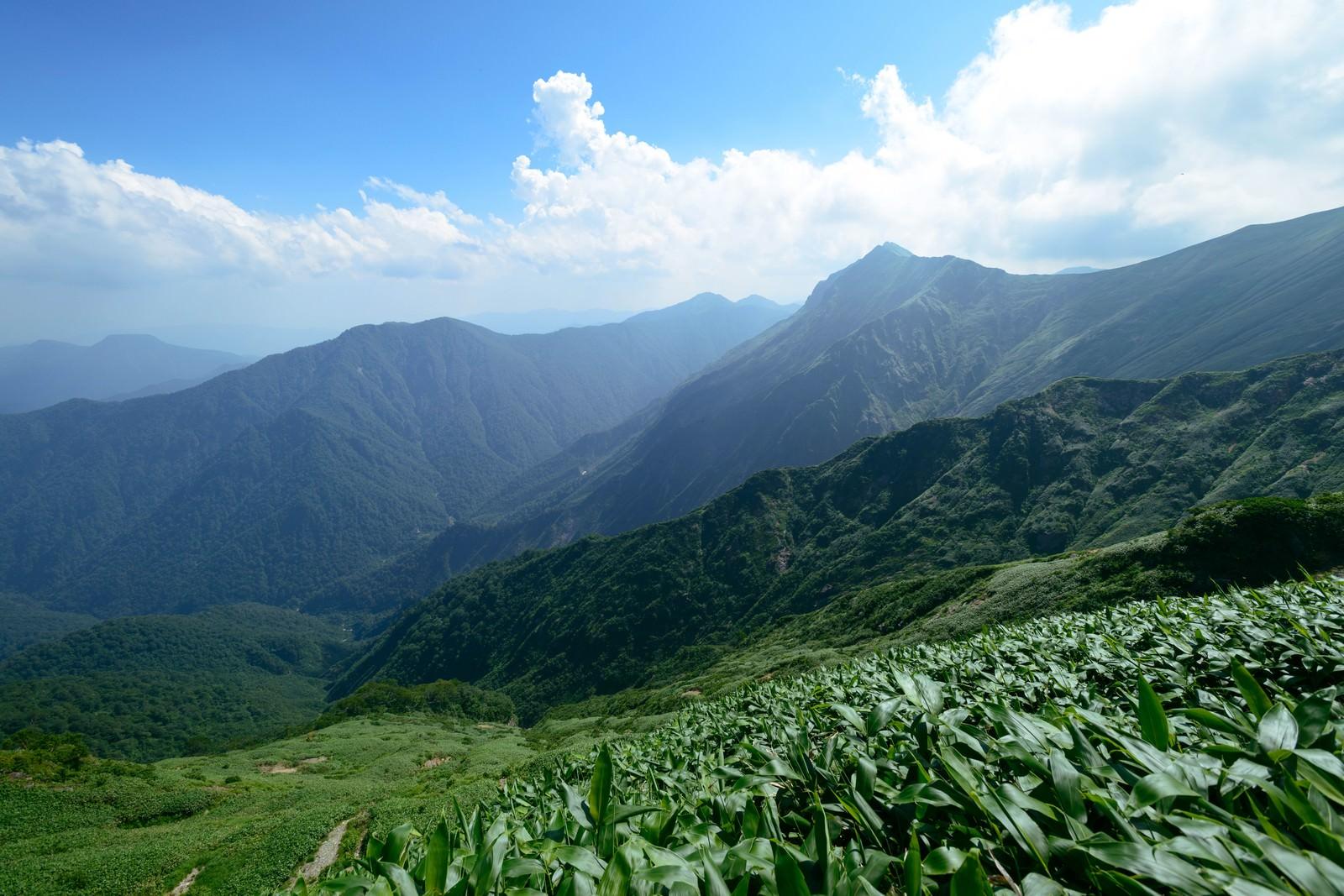 「太平洋へ続く登山道から望む渓谷」の写真