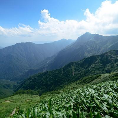 太平洋へ続く登山道から望む渓谷の写真
