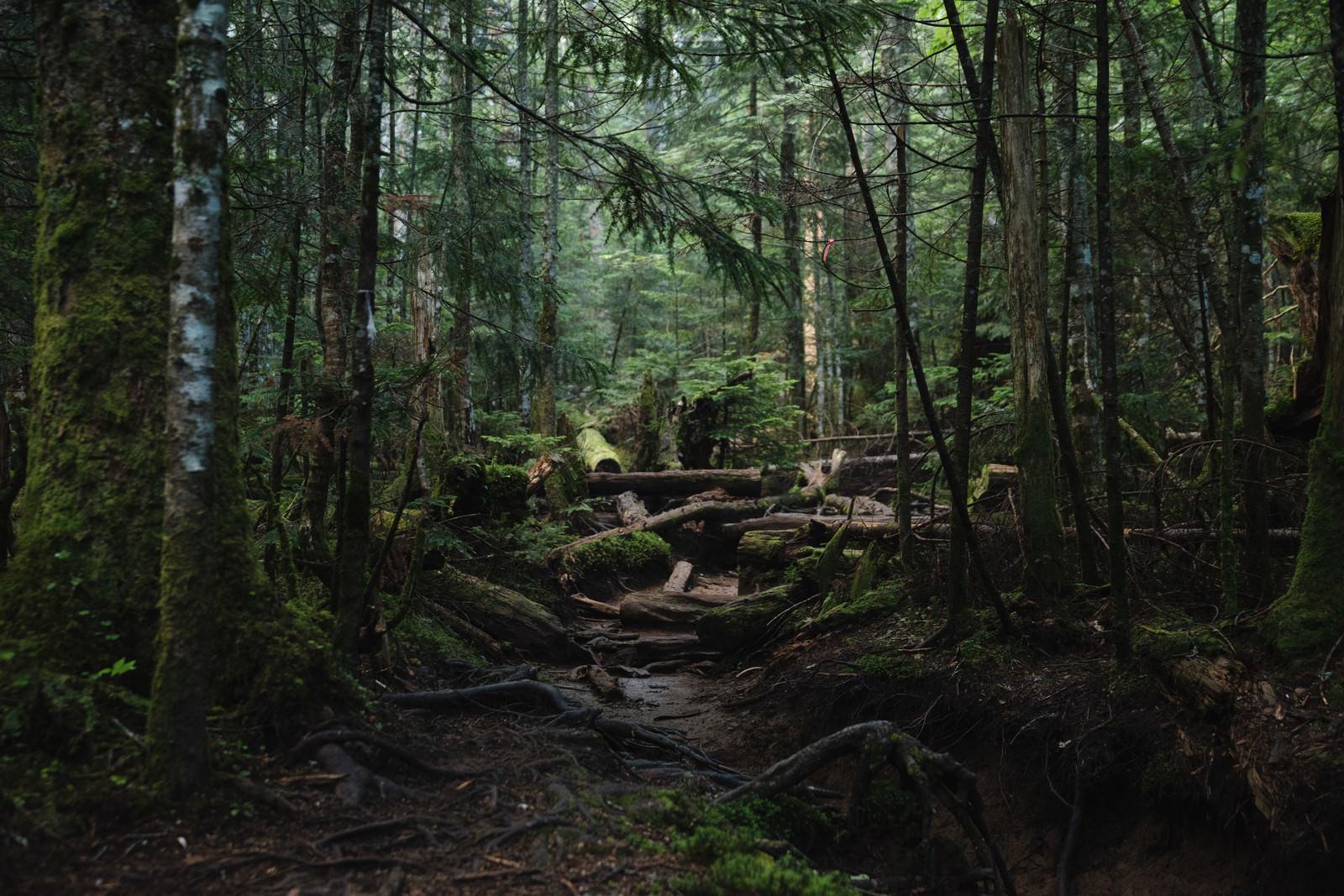 「奥へと続く足場の悪い登山道(白駒の森)」の写真