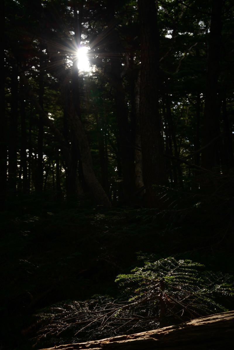 「白駒の森に射し込む光と影」の写真