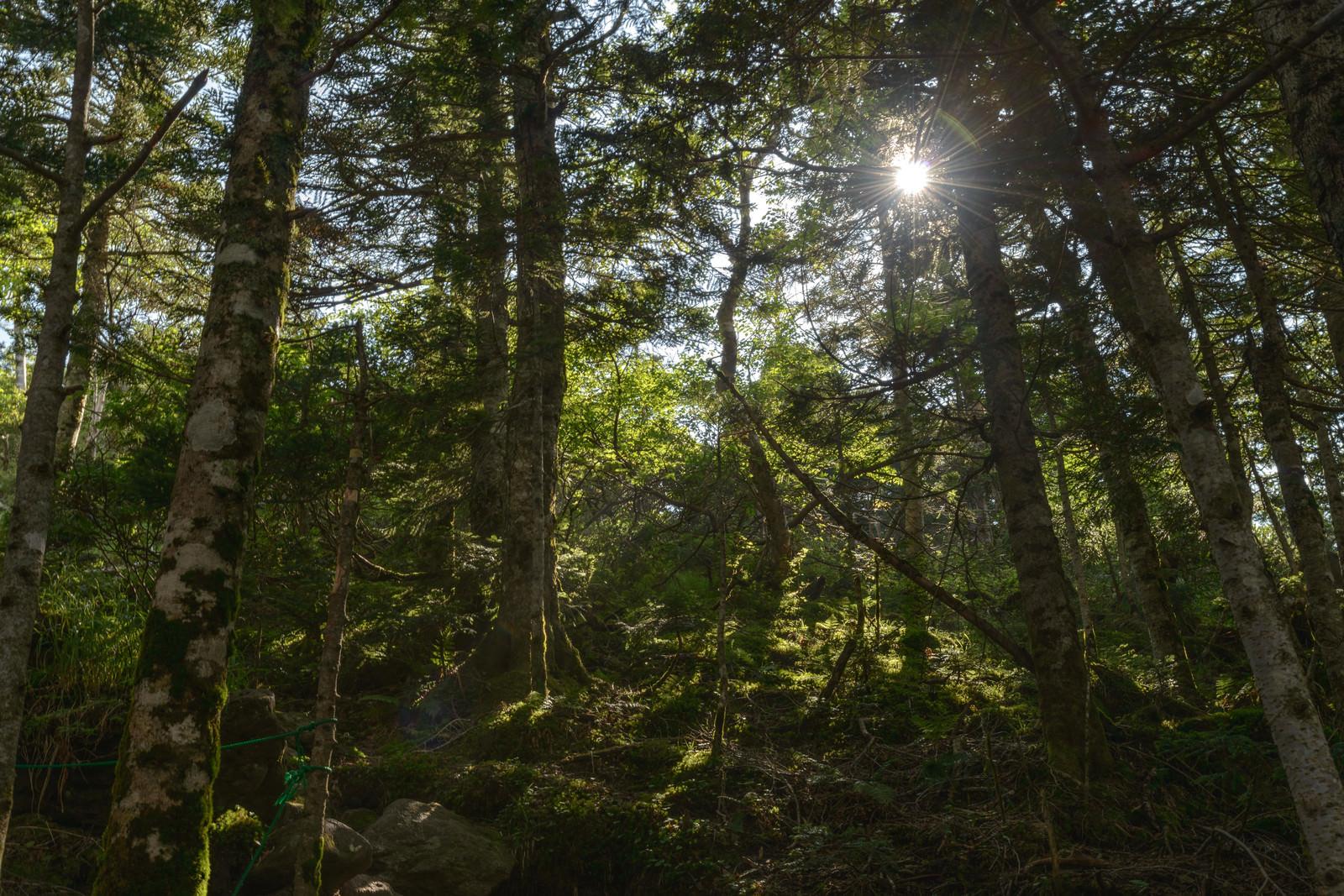 「天狗岳の森と木漏れ日」の写真