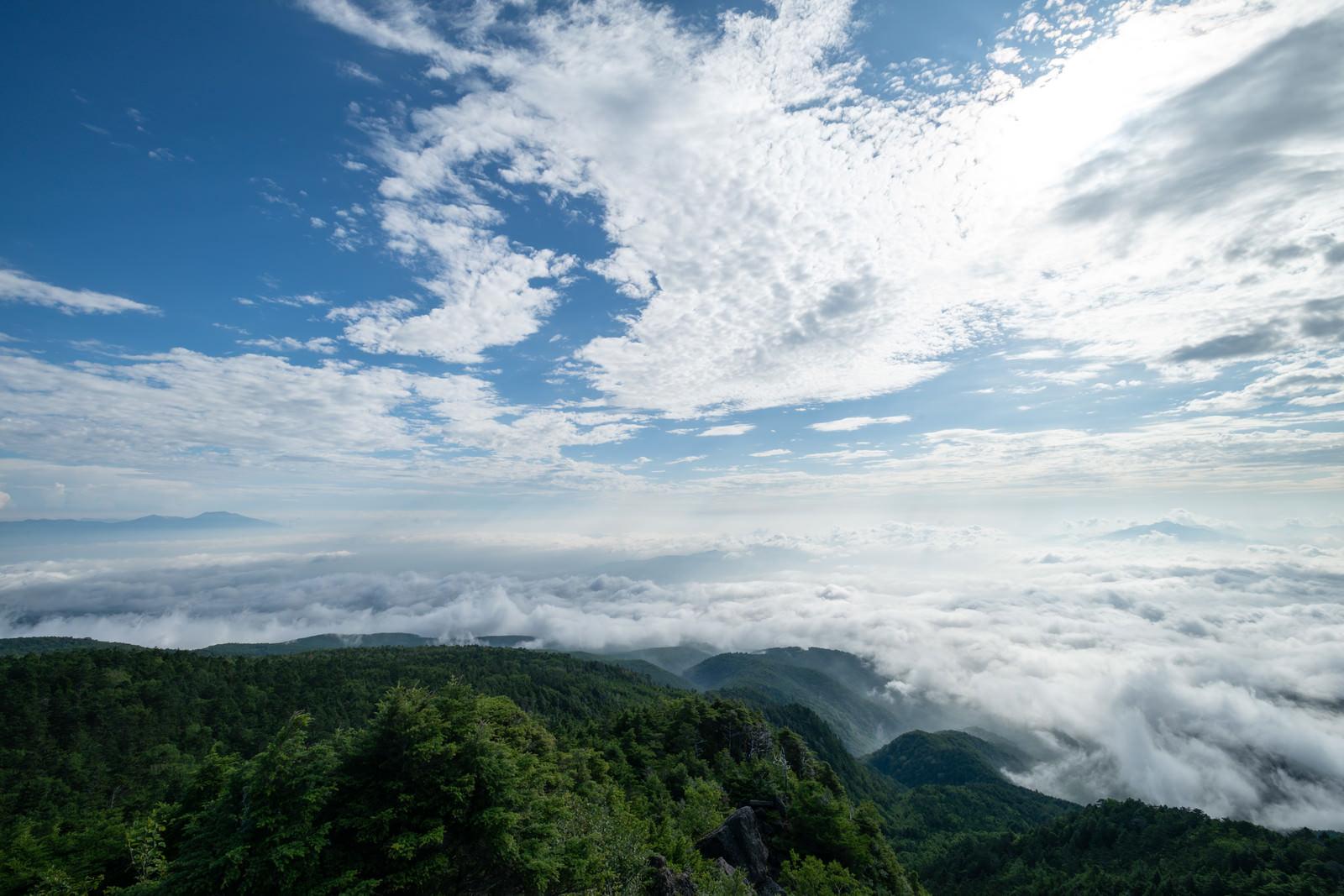 「にゅうから望む白駒の森と雲海」の写真