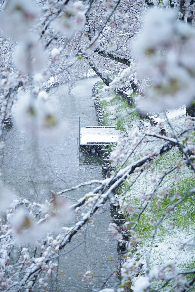 「河川の桟橋と降雪」の写真