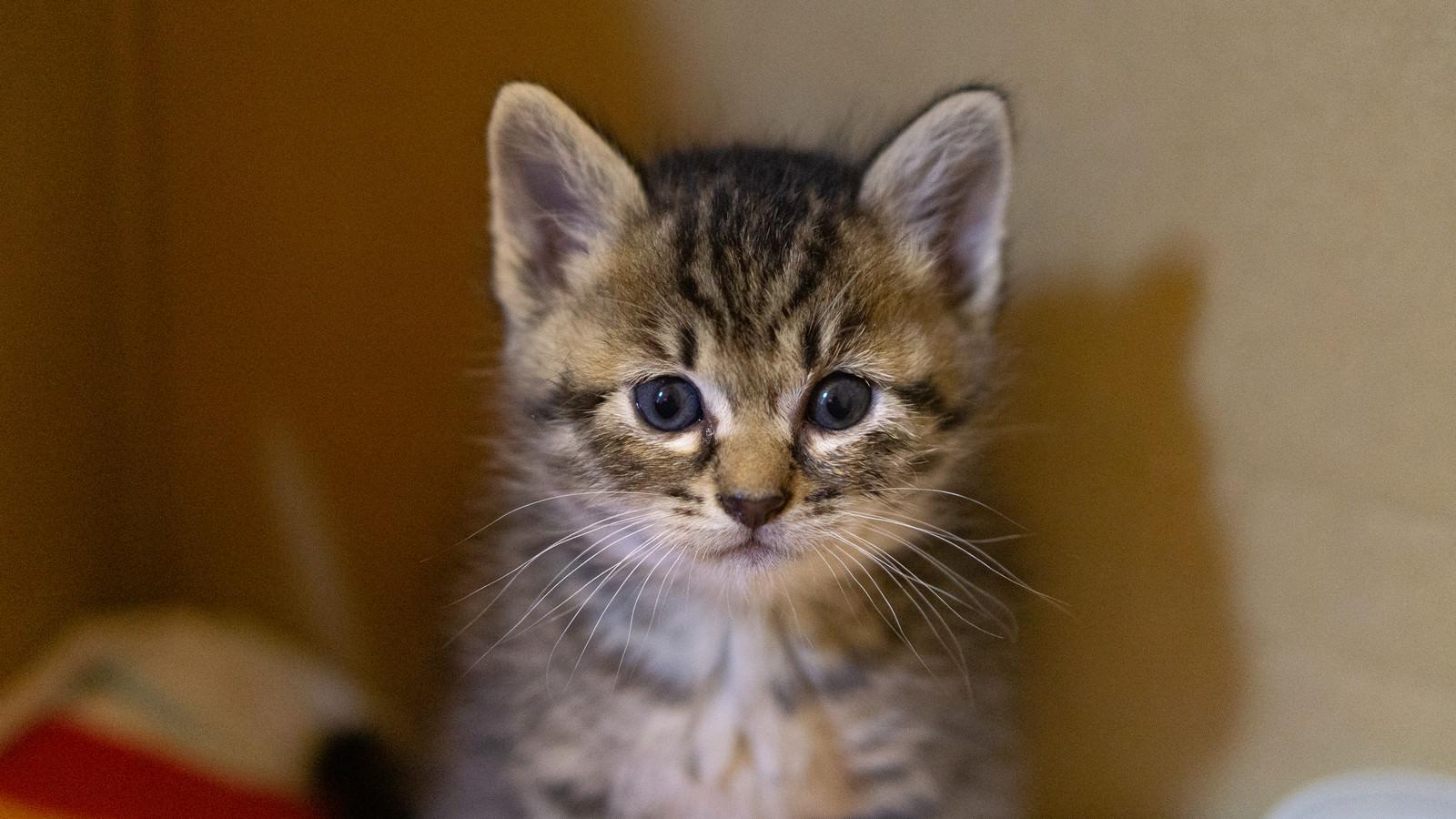 「おとなしい子猫」の写真