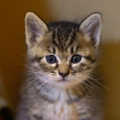 おとなしい子猫の写真