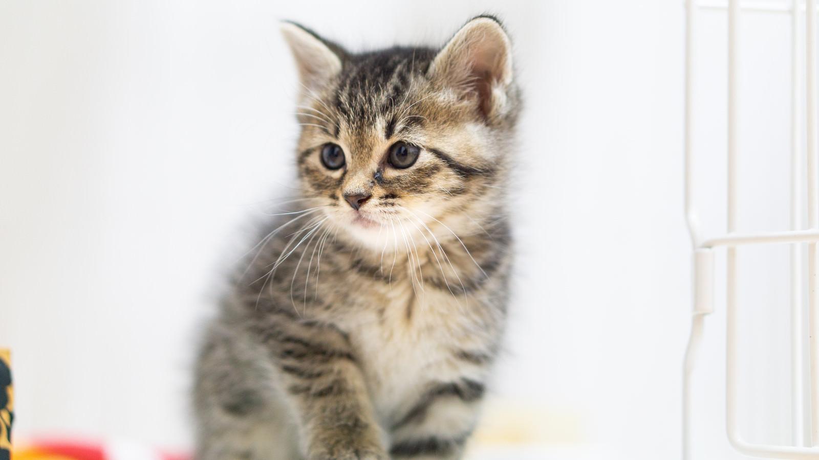 「ちょこんとおすわりする子猫」の写真
