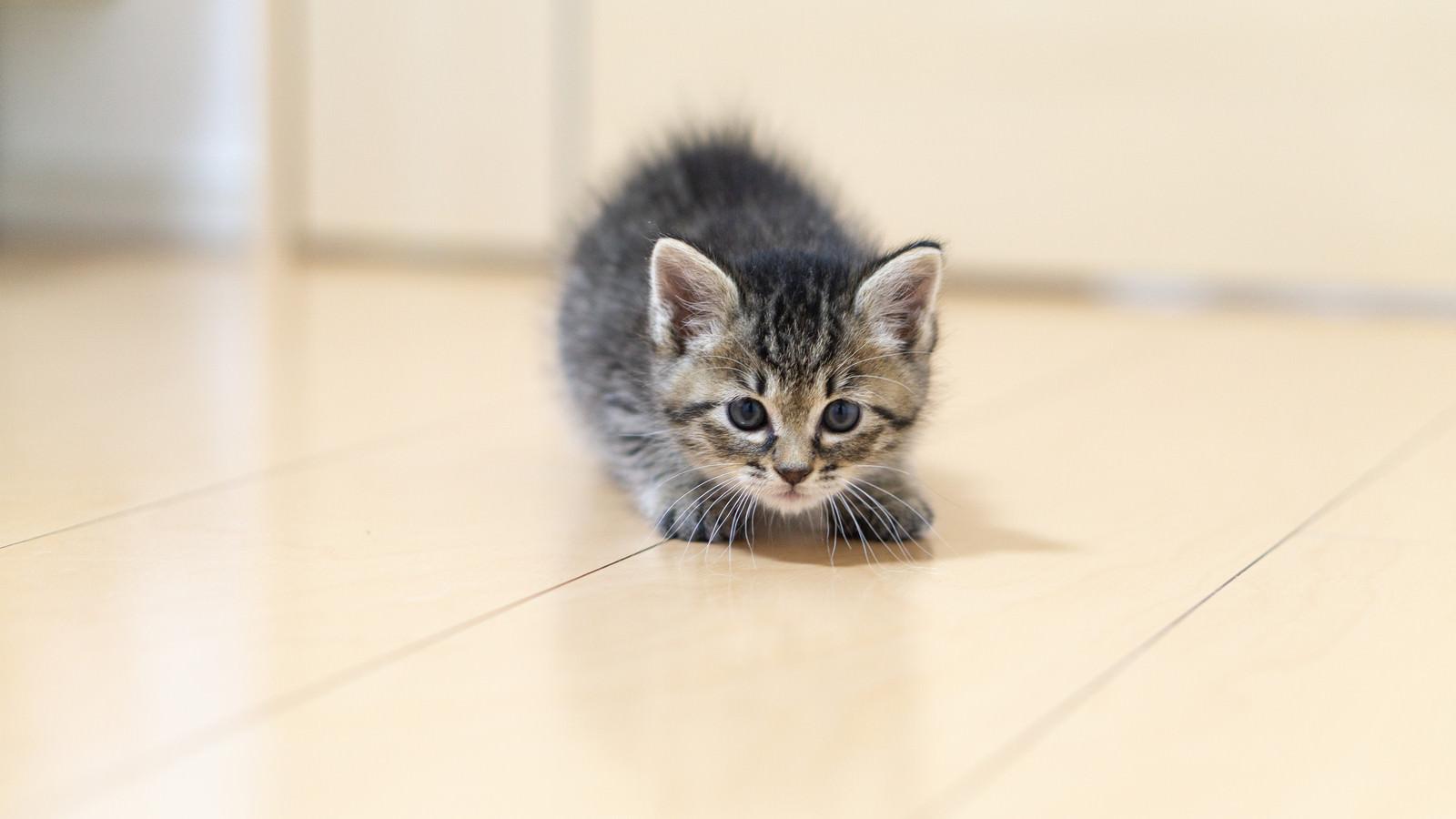 「身構えてもかわいい子猫」の写真